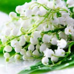 Lily of the Valley -- Official flower of Finland and Yugoslavia