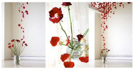 12 Roses Joseph Massie