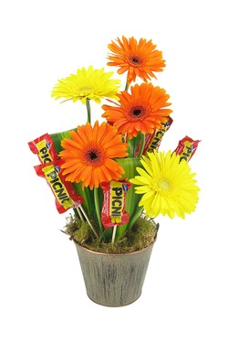 Gerbera and Picnic bars