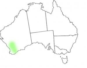 Caladenia filifera map