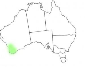 Caladenia longiclavata map