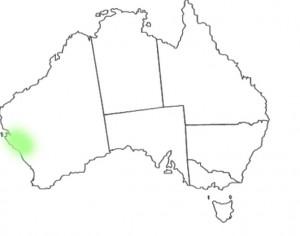 Calytrix brevifolia distribution