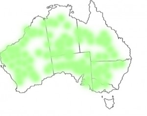 Ptilotus nobilis distribution