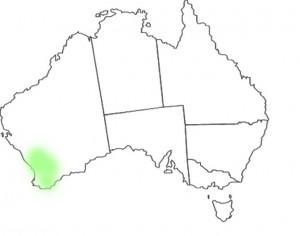 Stylidium eriopodum map