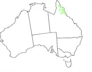Vappodes phalaenopsis map