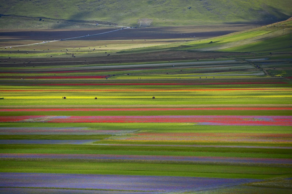 Amazing Fields of Flowers