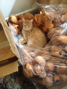 cat busted with teddies