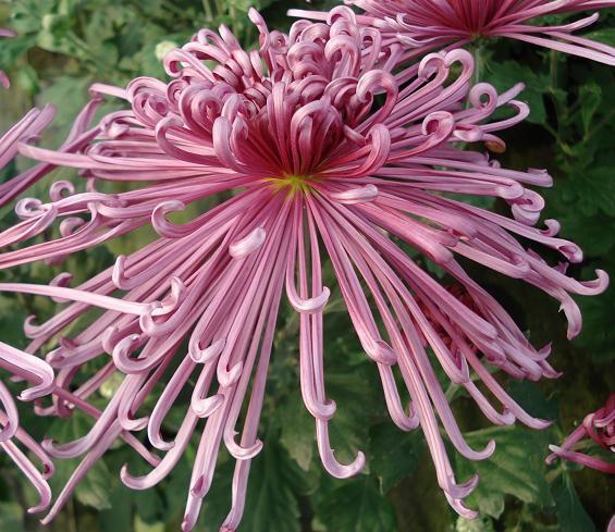 40 of the worlds weirdest flowers , Flowers Across Melbourne