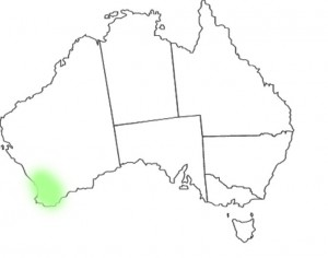 Stylidium eriopodum DC map