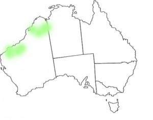 Stylidium fluminense map