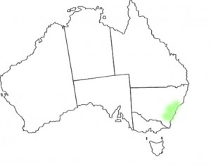Telopea speciosissima map