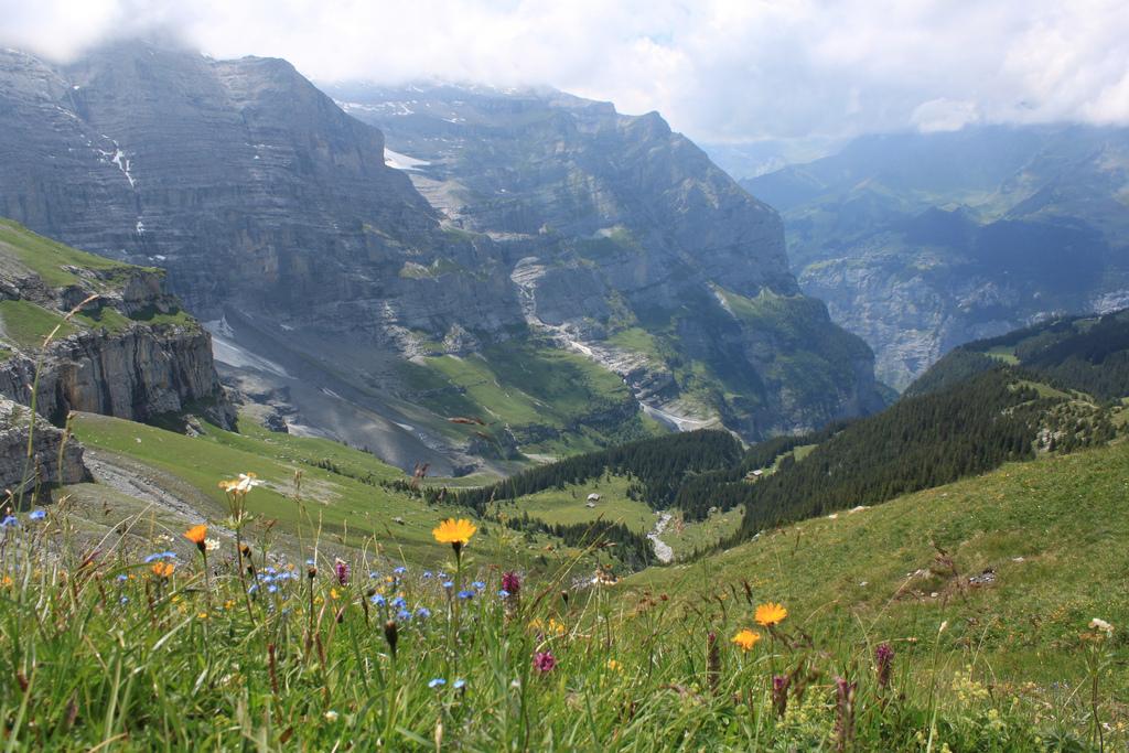 Swiss Alps Flowers 2