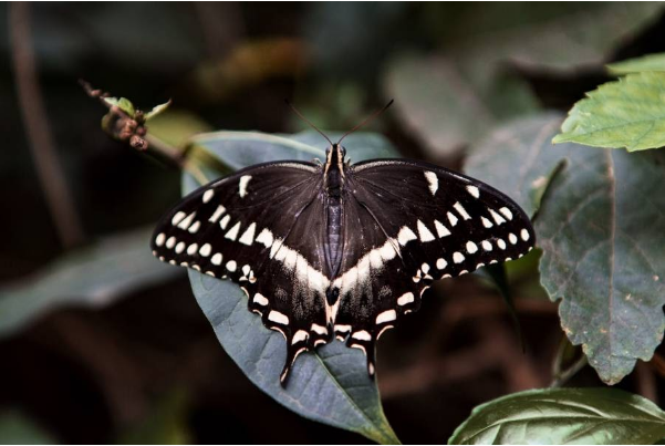 Bronx Zoo Butterfly Garden