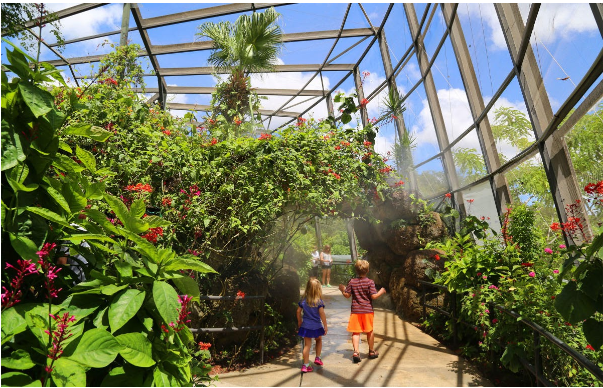 Butterfly World in Coconut Creek Florida