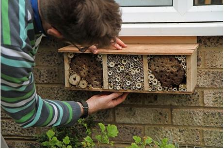 Bee Hotel, DIY, Bees, Garden, Aussie Bees