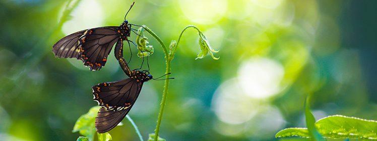 Butterfly on an unknown flower