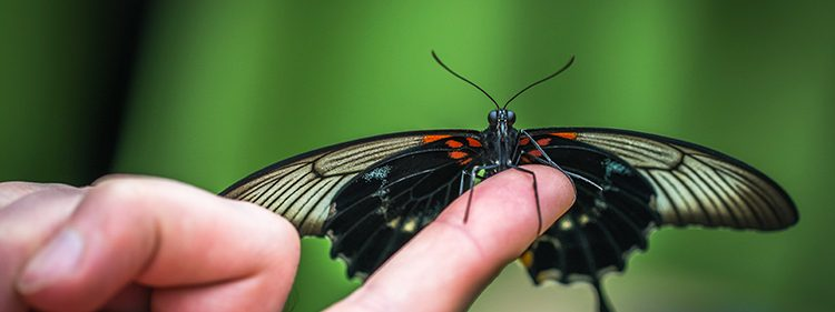 Butterfly on a finger tip