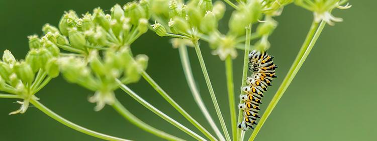 Caterpillar on Green Plant